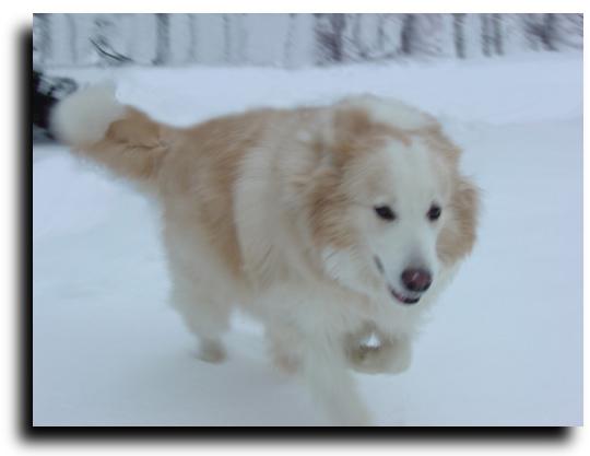 Winter Snoopy