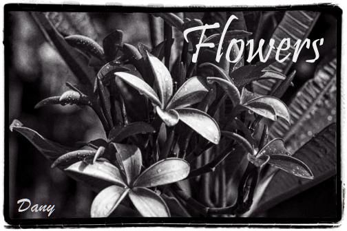 Flowers !!!