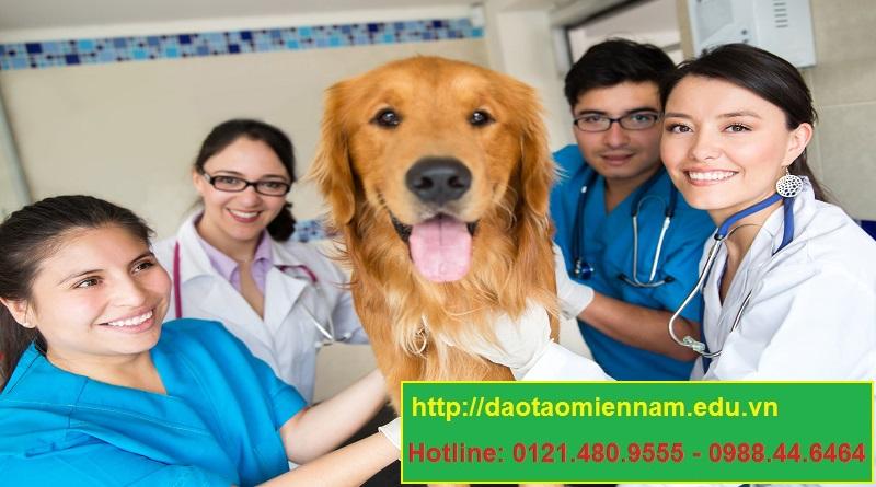 trung cấp chăn nuôi thú y tại đăk lăk