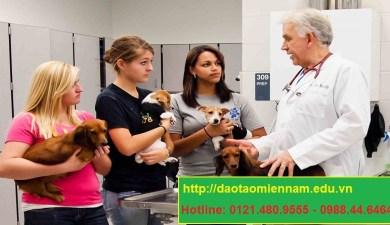 trung cấp chăn nuôi thú y tại phan rang