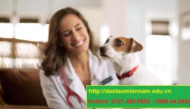 trung cấp chăn nuôi thú y tại thuận an