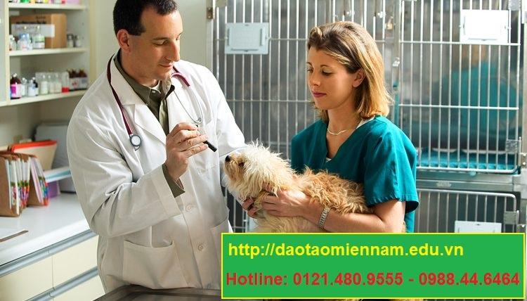 trung cấp chăn nuôi thú y tại biên hòa