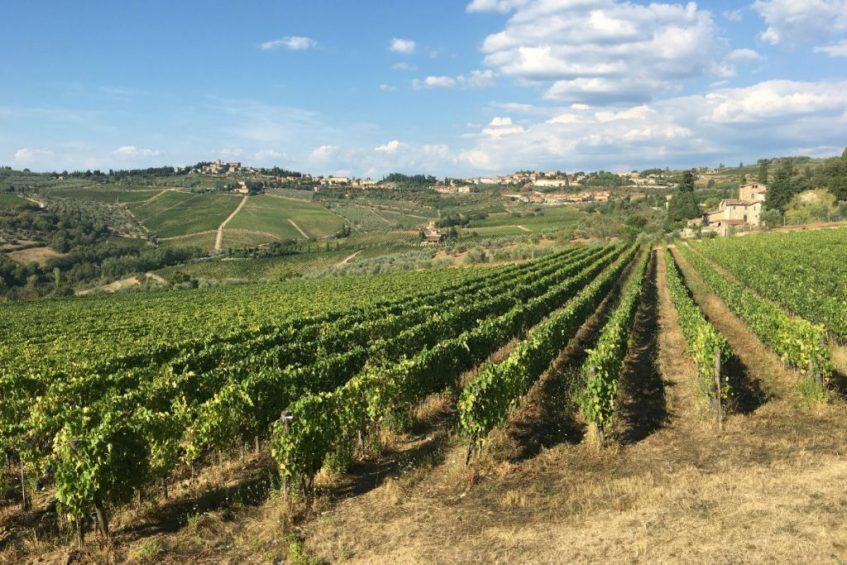 De glooiende wijnvelden in de Chianti streek vlakbij Greve in Toscane