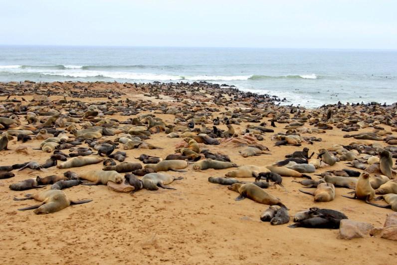 De zeehonden zijn een must see tijdens je route Namibie