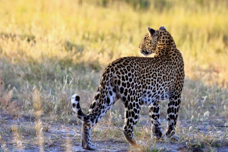 De prachtige Okavango Delta in Botswana