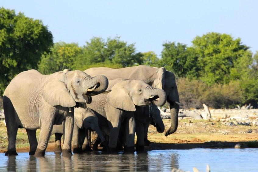 Bij een waterpoel in Etosha National Park heb je veel kans op een ontmoeting met de big 5
