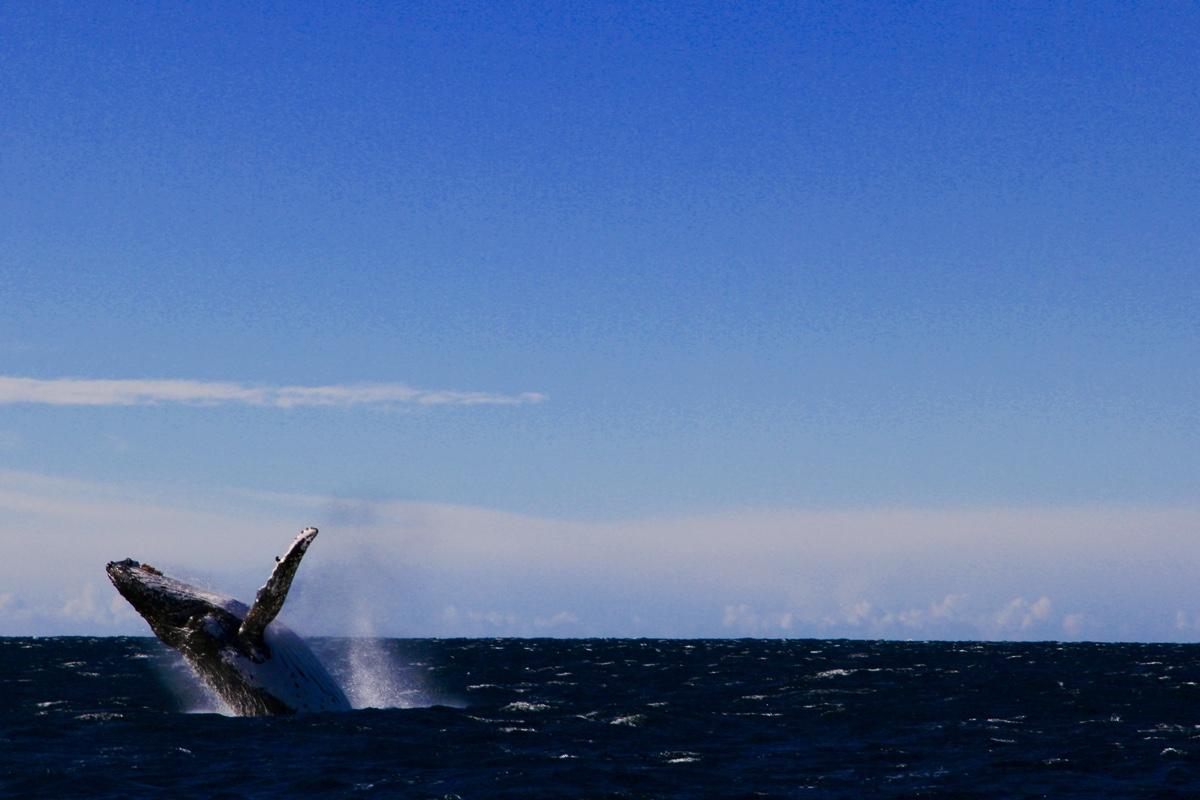De winter is een ideale periode voor het spotten van walvissen in Jervis Bay