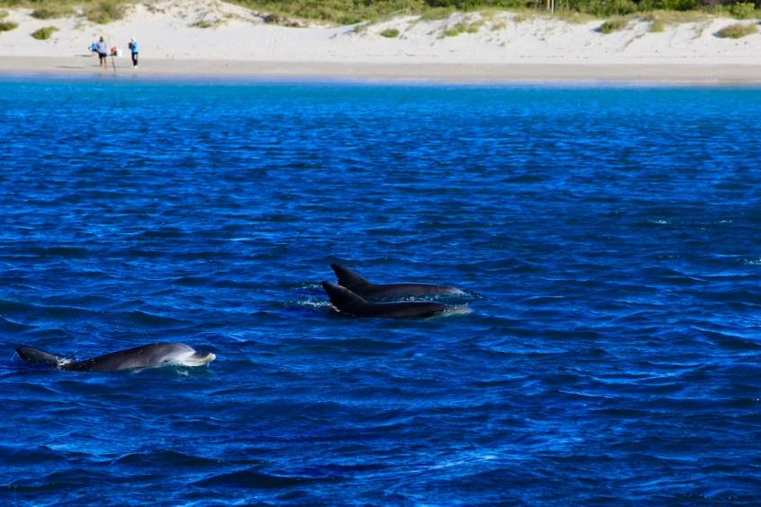 De winterperiode is ideaal voor het spotten van dolfijnen in Jervis Bay