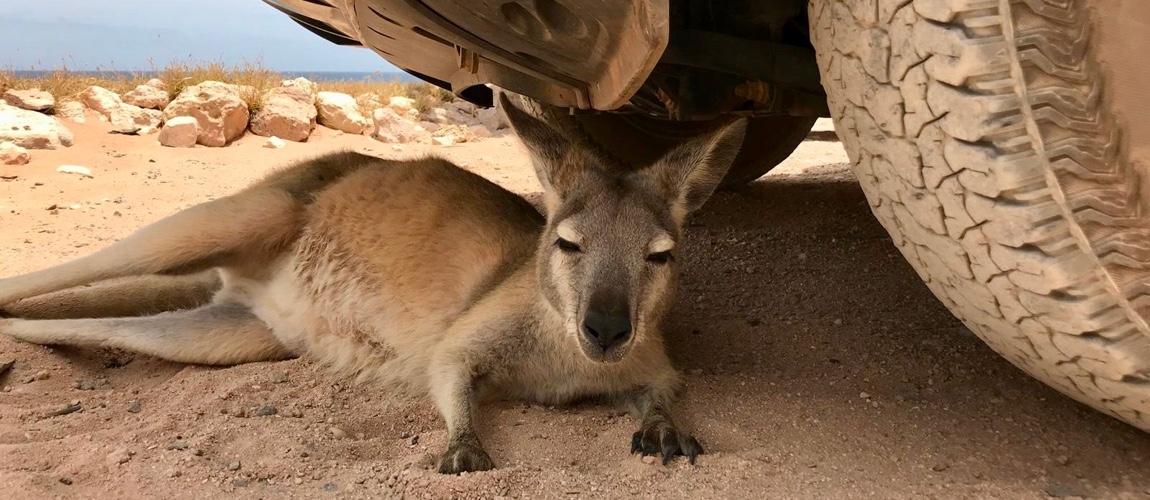 Reisdagboek van Broome naar Perth via de westkust en Karijini