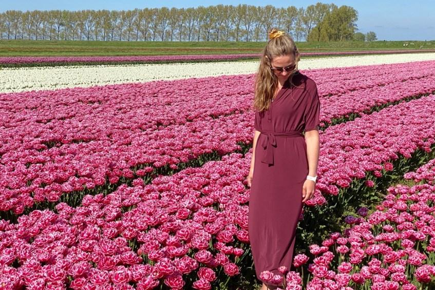 Dit zijn de prachtige tulpenvelden in provincie Groningen