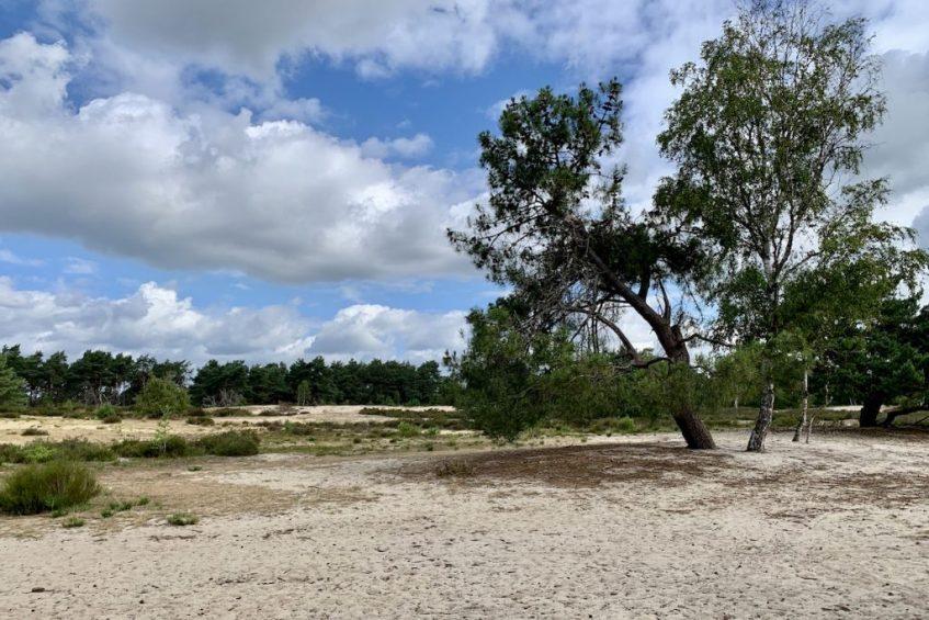 Ontspannen wandelen op de Kalmthoutse Heide in het grenspark