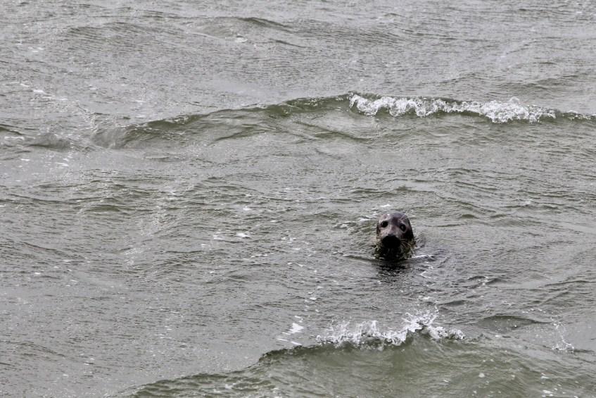 Op Texel moet je ook zeker een zeehondentocht doen om je weekendje weg compleet te maken