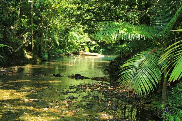 De heerlijke verkoelende oase in het Daintree National Park