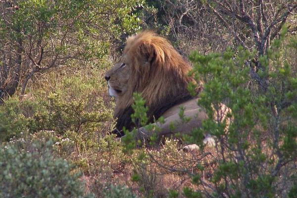 Goedemorgen leeuw!