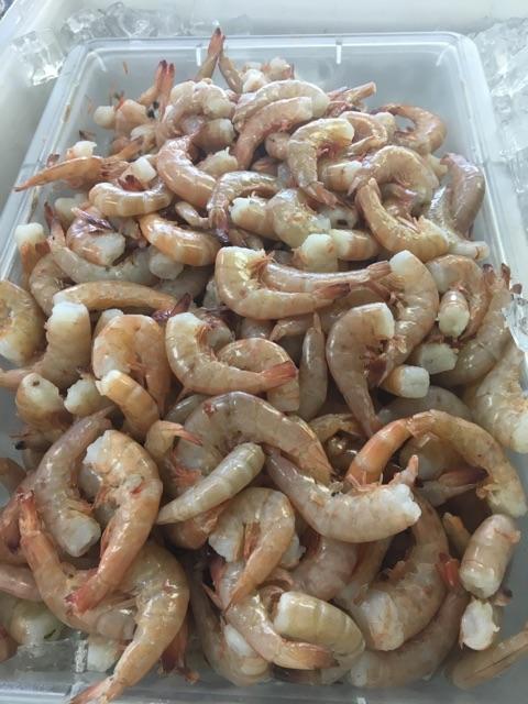 shrimp pic2
