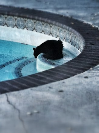 cassie and the pool