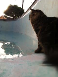 skyler in the pool