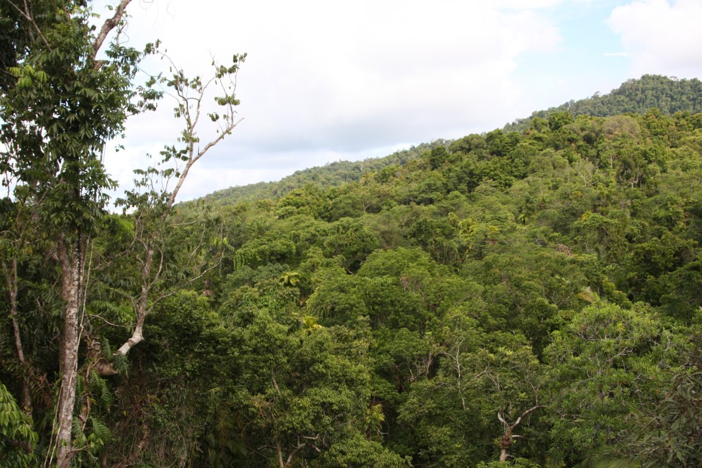 view of trees in the Daintree Rainforest