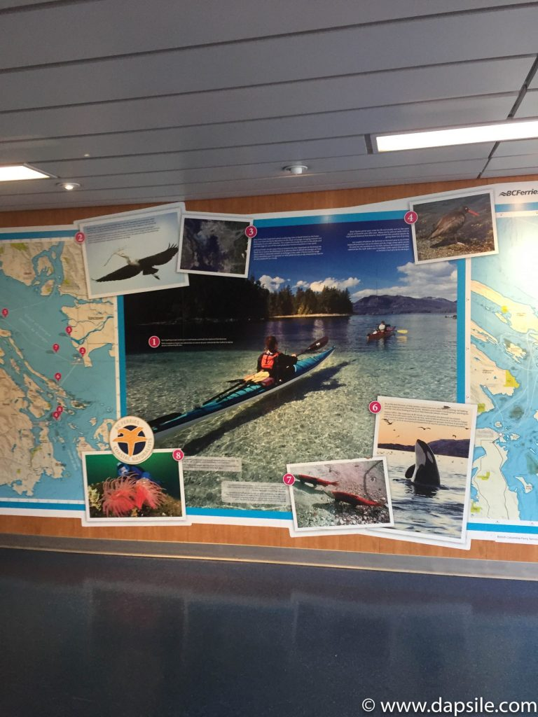 Map on display of the local area and wildlife when travelling from Vancouver to Victoria by Ferry