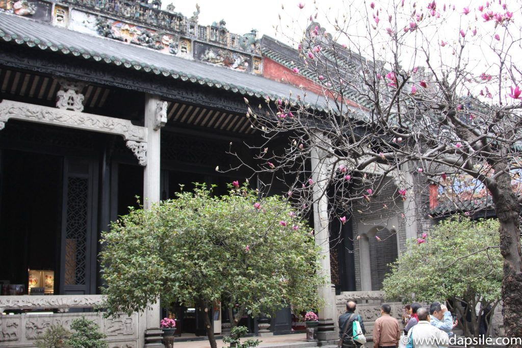 Trees in February at Guangdong Folk Arts Museum during layover in Guangzhou, China with China Southern