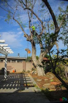 Mr. DAPs Railway Tree Removal-5