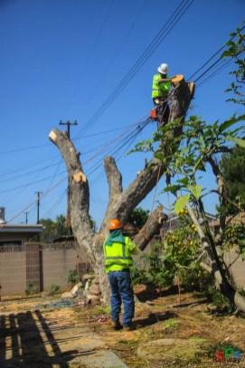 Mr. DAPs Railway Tree Removal-8