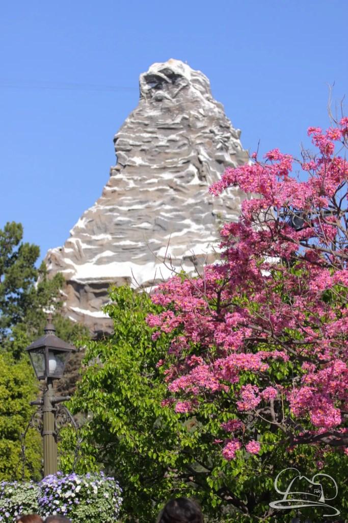Springtime at Disneyland - February_21_2016-10