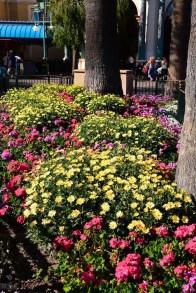DisneylandSpringtime 4