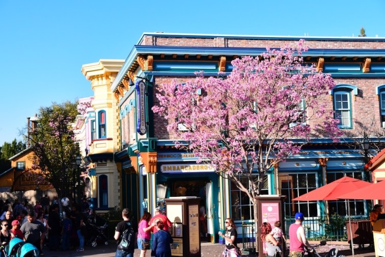 DisneylandSpringtime 7