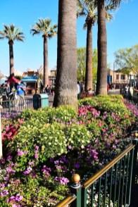 DisneylandSpringtime 8
