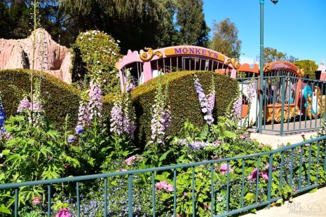 DisneylandSpring 3