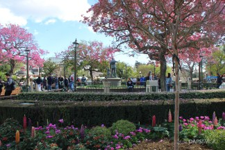 Disneyland Hub in the Spring
