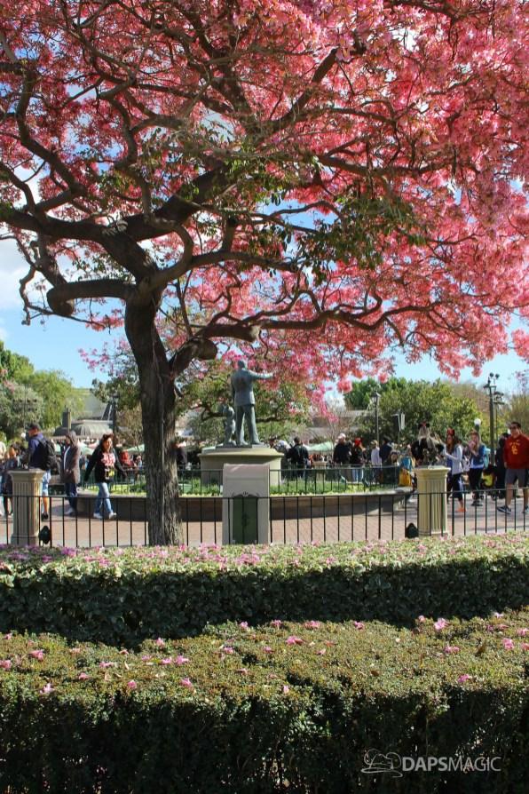 Disneyland Hub in the Spring