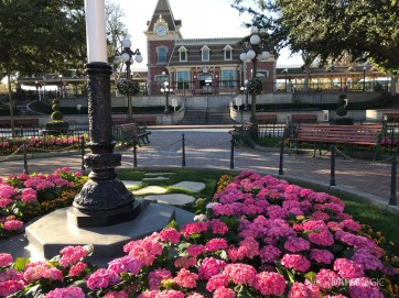 Disneyland Town Square Bricks With Walls Down in Spring-20