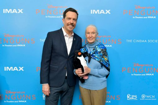 NEW YORK, NEW YORK - APRIL 14: Narrator Ed Helms and Disneynature Ambassador Dr. Jane Goodall attend Disneynature's 'PENGUINS' Premiere hosted by The Cinema Society at AMC Lincoln Square Theater on April 14, 2019 in New York. (Photo by Roy Rochlin/Getty Images for Disney Studios)