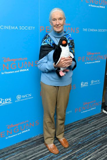 NEW YORK, NEW YORK - APRIL 14: Disneynature Ambassador Dr. Jane Goodall attends Disneynature's 'PENGUINS' Premiere hosted by The Cinema Society at AMC Lincoln Square Theater on April 14, 2019 in New York. (Photo by Roy Rochlin/Getty Images for Disney Studios)