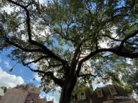 Liberty Tree in Liberty Square at Magic Kingdom-16