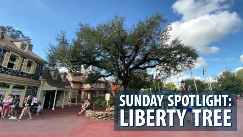 Sunday Spotlight: Liberty Tree