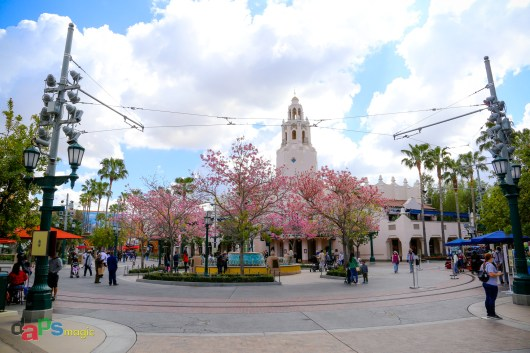 Carthay Circle with the blooming Tabebuia trees