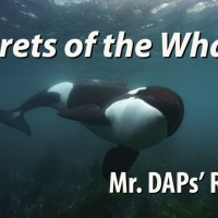 Secrets of the Whales - Mr. DAPs Review