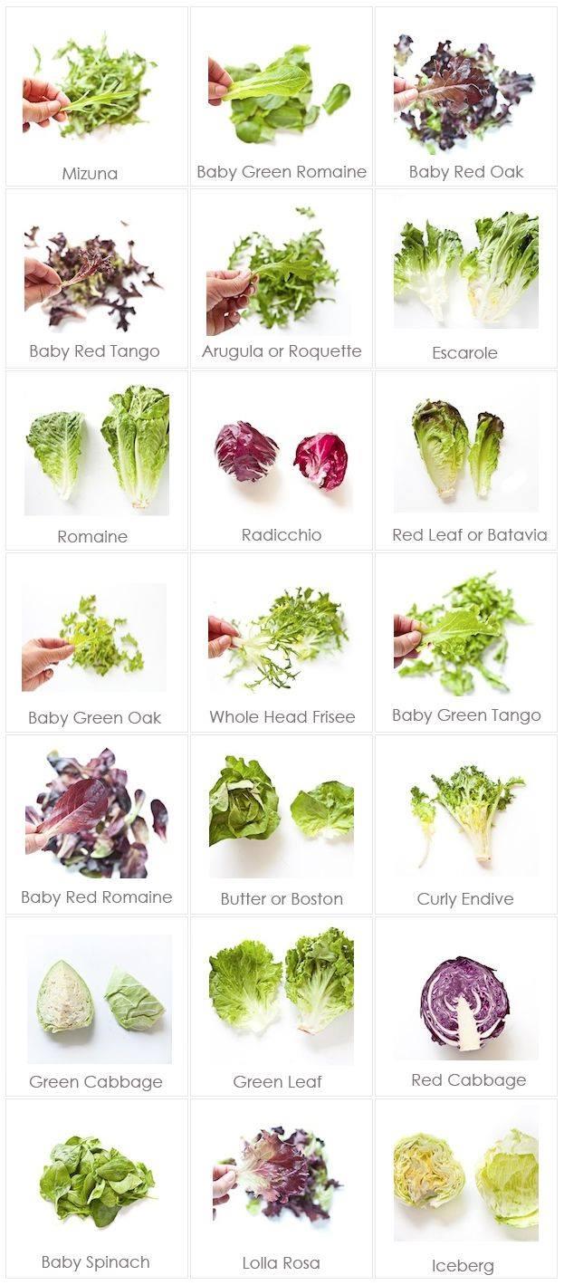 Jenis Sayuran Daun : jenis, sayuran, Lettuce, Selada, Dapur, Prima