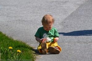 He liked picking dandelions too. Too bad he didn't like walking.