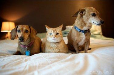 Необходимо обезопасить домашних животных при монтаже окон ПВХ