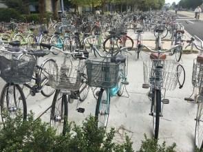 Loads of bikes everywhere