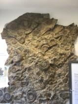 Amazing fossils on campus