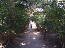 serene walking path