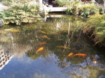Goldfish enjoy serenity