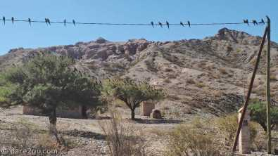 RN40: a large flock of parrots near Santa Rosa