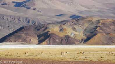 Paso San Francisco, Argentina: more Vicuñas running away from us (despite over 500m distance)
