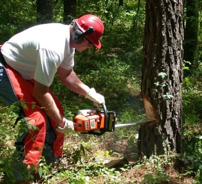 Ayurveda helps clean out the dead wood like a chainsaw in a forest